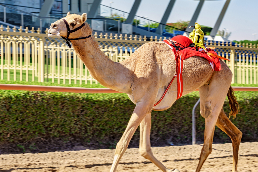 Dubai Camel Racing Club, Al Marmoom Racetrack, Dubai-Al Ain Road