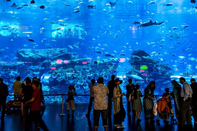 Gawp at Dubai Aquarium & Underwater Zoo