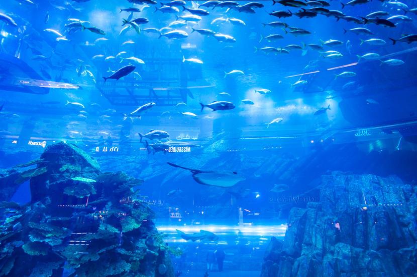 Dubai Aquarium & Underwater Zoo, attractions and sights in Dubai