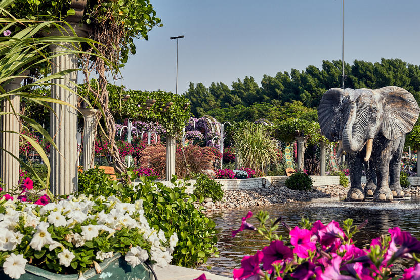 In Pictures Dubai Miracle Garden Opens For 2020 Season Attractions Time Out Dubai