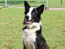 BENJAMIN He loves walks, being social and gets along great with other dogsand is a very sweet boy who wouldbe a great addition to any family.(056 357 6013).
