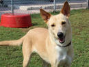 GLORIA She's happy, sweet and always seems to have a smile on her faceand aglimmer in her eyes. She gets along with dogs and loves people.(056 357 6013).