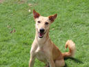 JULIA Julia is a sweet and loving girl looking for her new family. She getsalong with dogs and loves lots ofattention from her humans.(056 357 6013).