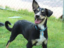 MAX Max is a little boy with a big personality. He loves playtime withenjoys jumping on his soft squeakytoys and playing tug-of-war.(056 357 6013).