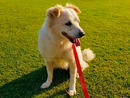 WALTER Six-year-old Walter is easy-going and is good with children big andsmall. He loves cuddles and goingfor little walks.(050 534 2694).