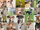 There are hundreds of dogs in the UAE waiting to be adopted or fostered