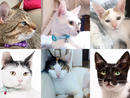 If you're looking for a new pet to complete your family, check out these gorgeous kitties that are looking for a foster or permanent home.