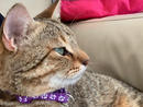 ARIS Two-year-old Aris is an outgoing chap. He lovesattention and hugs.kittysnipadoption@gmail.com