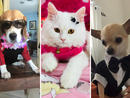 With the UAE being a nation of animal-lovers, Time Out has launched its first virtual pet show The competition, in association with The Pet Shop / dubaipetfood.com, has 12 categories (for all of them click here) and this one celebrates the most stylish pets in the UAE.Here are the entries we've had so far, stay tuned for the judges' verdicts and check back regularly, as these galleries will be updated frequently with all your four-legged friends.Think your pet is the best? Enter them into the show by  emailing a photo to petshow@timeoutdubai.com, or tag us at @timeoutdubai, @timeoutabudhabi and @timeoutuaekids on Instagram with the hashtag #TOPetshow