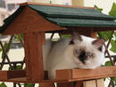 Pet: SnowyOwner: Ilona Chupite