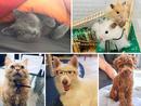 Time Out UAE Virtual Pet Show: judges' views group 5