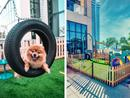 In pictures: Pet playground opens at Vida Emirates Hills