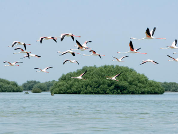 Things to do in Umm Al Quwain