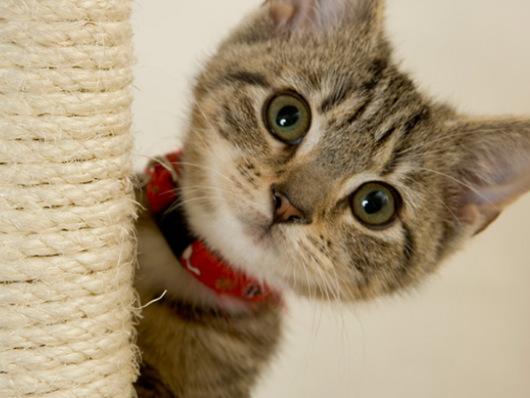 Cat adoption extravaganza at Animal Specialist Clinic