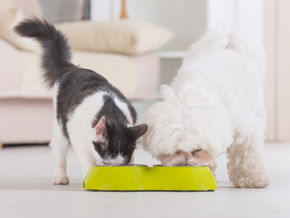 Ethical and healthy food for UAE pets
