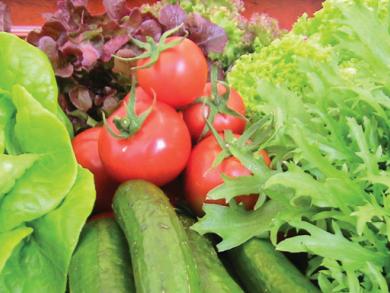 Farming in the UAE investigated