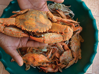Crab hunting in Umm Al Quwain