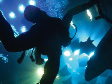 Sharks in Dubai