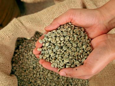 Crafting coffee in Dubai