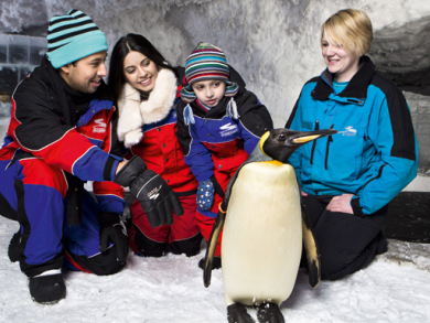 Party with penguins in Dubai
