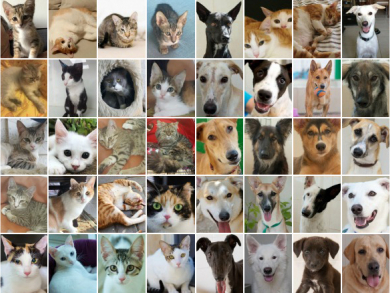 The 55 dogs and cats in need of adoption this summer