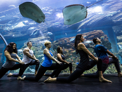 """Try out """"Underwater Yoga"""" at The Dubai Mall"""