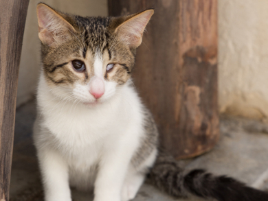 Six kittens you need to adopt in Dubai right now