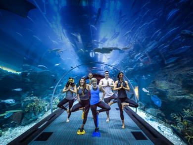Underwater yoga comes to Dubai Aquarium