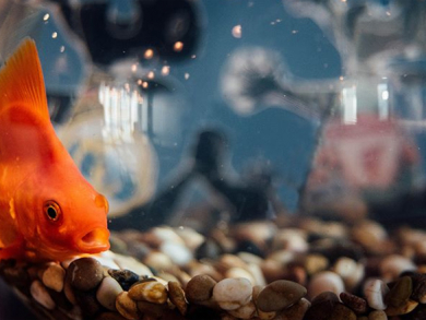 Dubai is getting its own Paul the Octopus for the World Cup