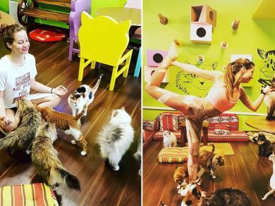 Try cat yoga at Dubai's Ailuromania Café