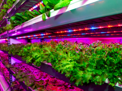Expo 2020 to collaborate with world's largest vertical farm