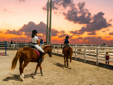 Al Habtoor Polo Resort and Club to host an open day at its riding school