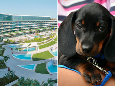 W Dubai – The Palm offers pet-friendly hotel stays