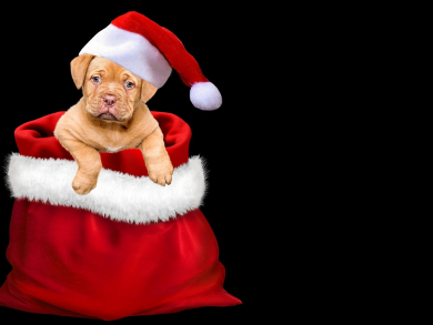 Free treats at Dubai's La Serre for all dogs dressed up in Christmas outfits