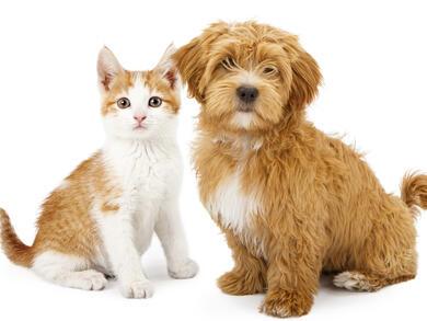 Pet-friendly places in Dubai