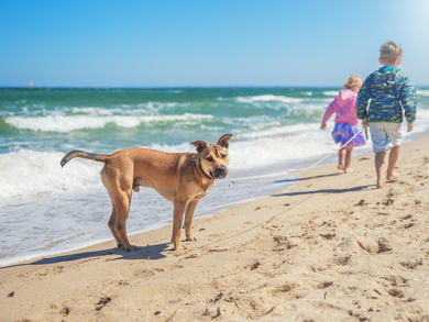 Dogwalk Dubai and Reading Dogs UAE are running a dog-training workshop for kids