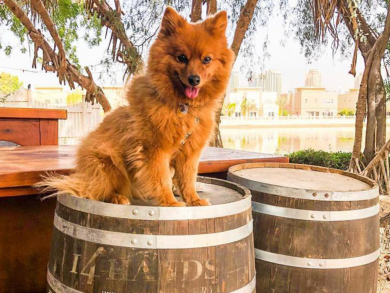 Reform Social and Grill hosting special Great Dog Rescue Quiz