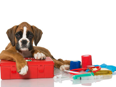 Dogwalk is hosting a canine first aid training course