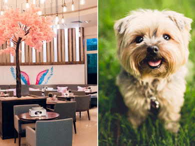 You can now take your dog to Bounty Beets at Dubai Marina