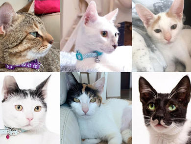 Adopt or foster one of these cute cats that are looking for a home in the UAE