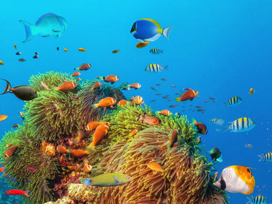 You can explore the Great Barrier Reef with David Attenborough from the UAE