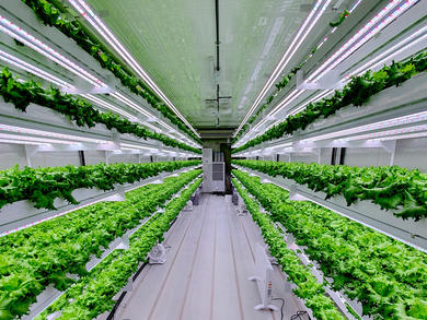 UAE to launch hydroponic vertical farming in 2020