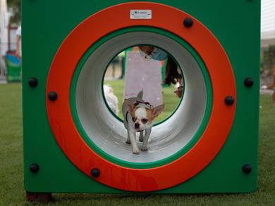 New Dubai dog park opens in JLT