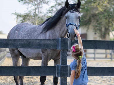 Dubai Polo & Equestrian Club launches kids' summer playcation camp