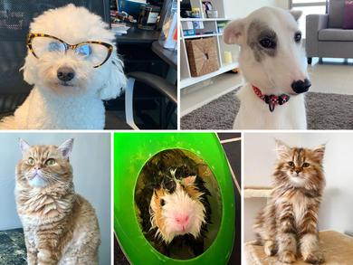 Time Out UAE Virtual Pet Show: judges' views group 1
