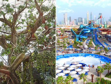 You can get a double pass for Dubai's Laguna Waterpark and Green Planet for Dhs150