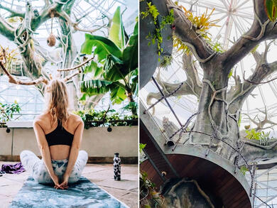 You can now do rainforest yoga every weekend in Dubai