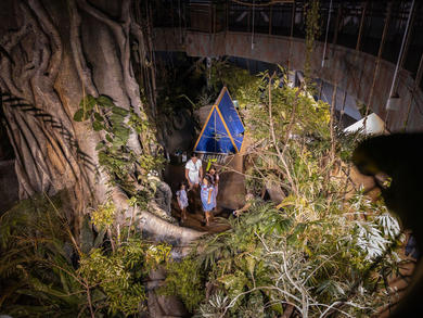 Spend the night under the stars in a rainforest at The Green Planet Dubai